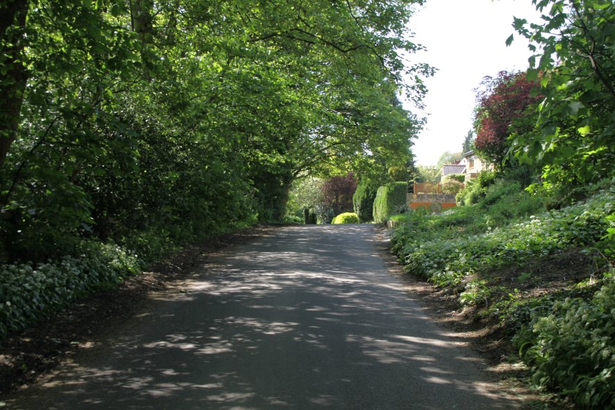 Linton Common