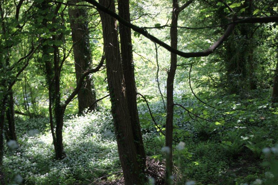 Linton Common Woodlands